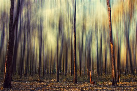 Abstract Nature Photography: 3 Effective Tips to Create