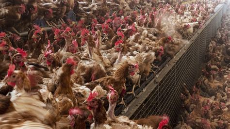 As COVID Pummels Slaughterhouse Workers, Meat Companies