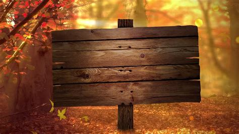 Fall Background with Autumn Colors, Stock Footage Video