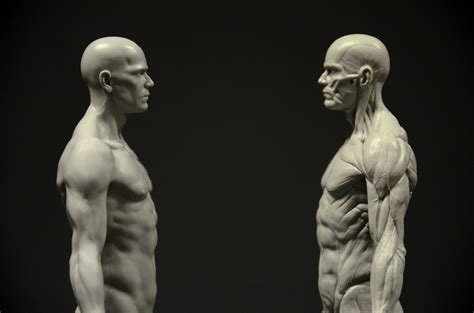 3D Total Anatomy Reference Casts – Review | On Animation