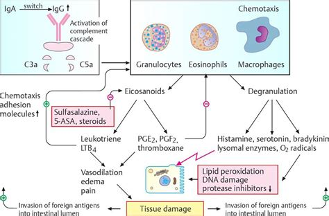 Drugs Acting on the Gastrointestinal System - Pharmacology