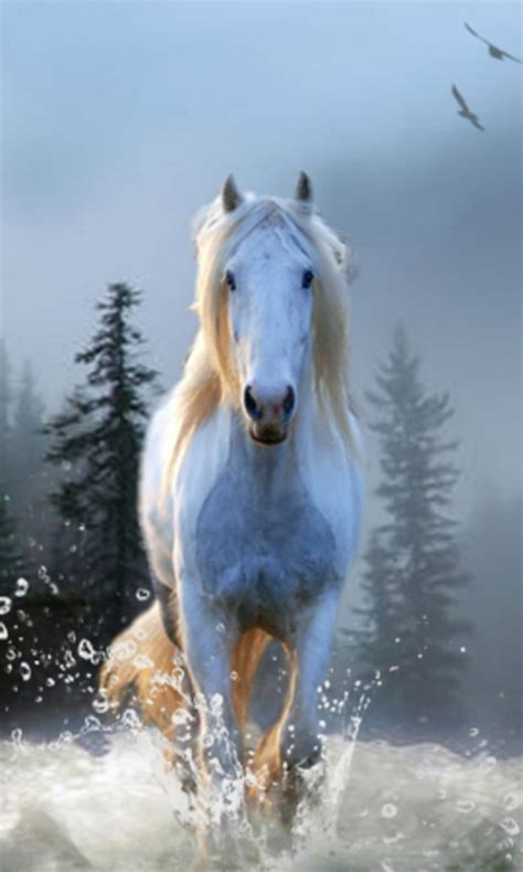 Free Horse Wallpapers app APK Download For Android   GetJar