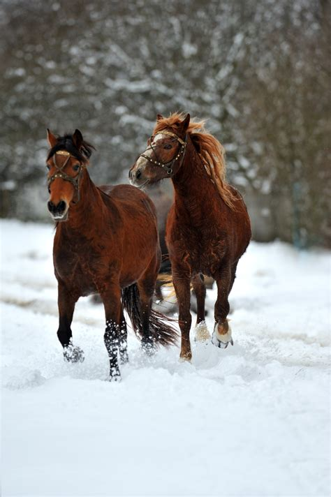 5 Tips: Winterize Your Barn to Keep Horses Healthy During
