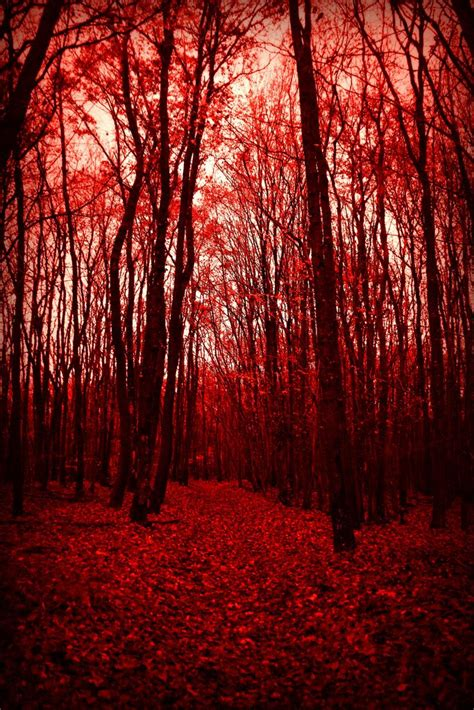 Red Forest   Aesthetic photography nature, Nature photography