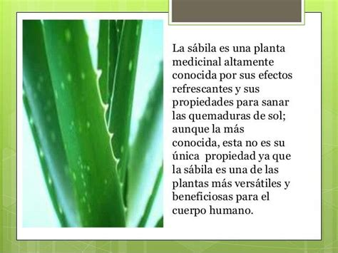 17 Best images about Salud con plantas